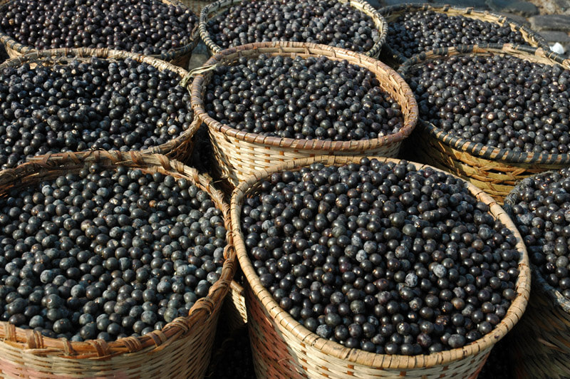 acai-nutry-super-frutas-beneficios-do-acai